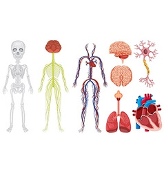 Different system in human body vector