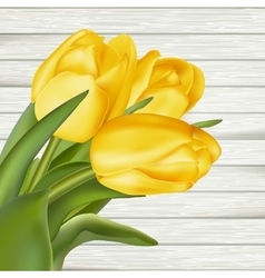 Yellow tulips EPS 10 vector image vector image