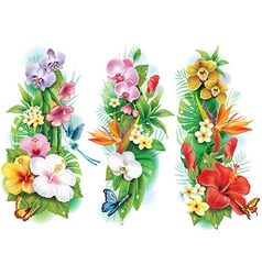 Arrangement from tropical flowers and leaves vector image