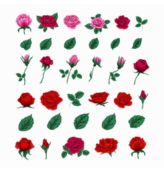 Set of beautiful roses flowers and leaves vector