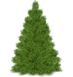 Fir tree isolated vector