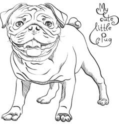 sketch cute dog black pug breed vector image