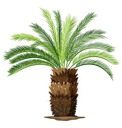 A topview of a sago palm plant vector