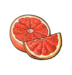 Half and quarter of ripe pink grapefruit hand vector