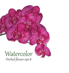 Orchid watercolor flower vector