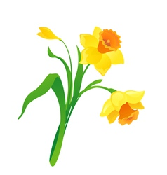 Cartoon daffodil vector
