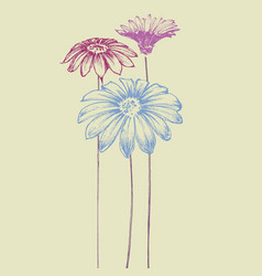 hand drawn flowers beautiful daisy design for vector image vector image