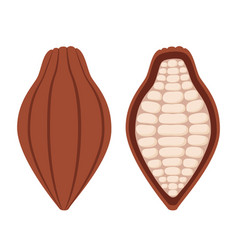 cacao beans brown organic plant fruit of chocolate vector image