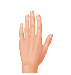 Hand isolated vector