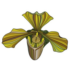 Exotic orchid painted in yellow-green colors vector