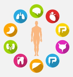 Silhouette of male and internal human organs vector