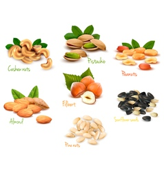 Big collection of ripe nuts vector image