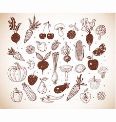 doodle fruits and vegetables sketch vector image vector image