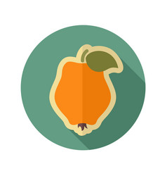 Quince flat icon tropical fruit vector
