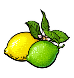 whole shiny lime and lemon with fresh green leaf vector image vector image