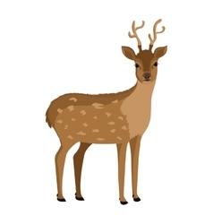 Brown deer front view graphic vector