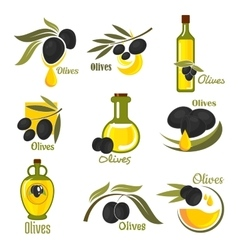 Olive fruits with leaves and oil bottles vector image vector image