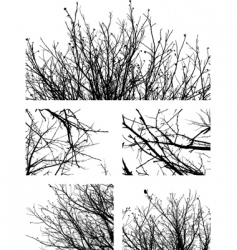 silhouettes of branches vector image vector image