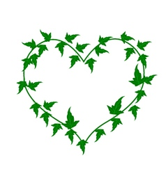Green Ivy Vine in A Beautiful Heart Shape vector image