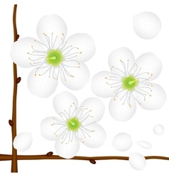 Painted apple tree flower vector