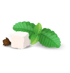 A piece of sugar mint leaves and cloves close-up vector