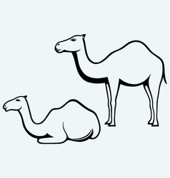 Standing and lying camels vector image vector image