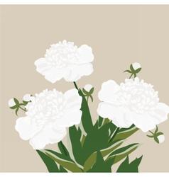 Vintage watercolor peony flowers vector