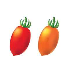 Two cherry tomato on white background vector