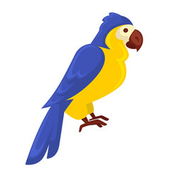 ara parrot in blue-yellow colors isolated on white vector image