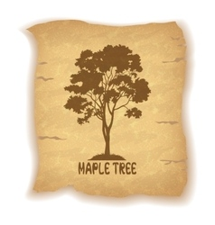Maple tree on old paper vector