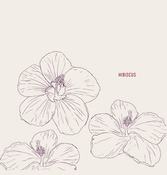 hawaiian hibiscus flowers sketch vector image