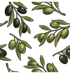Seamless pattern olives on branch with leaves vector