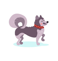 Siberian husky dog character colorful vector