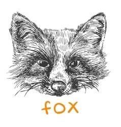 Sketch of fox vector