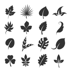 Tree leaf silhouettes Leaves vector image vector image