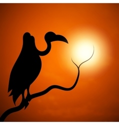 The silhouette of a vulture sunset vector