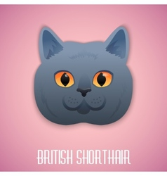 Ritish shorthair blue cat with orange eyes on pink vector