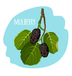 mulberry with green leaves isolated on blue vector image