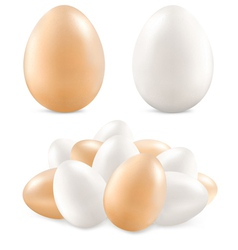 white and yellow eggs vector image