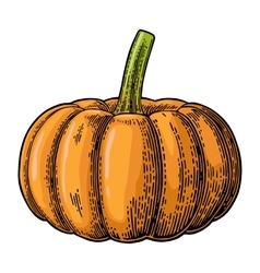 Pumpkin color vintage engraving vector