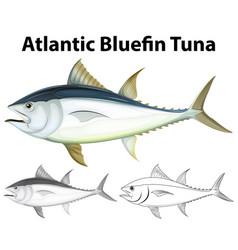 Drafting character for atlantic bluefin tuna vector