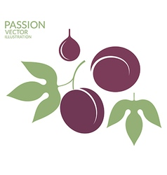 Passion fruit vector