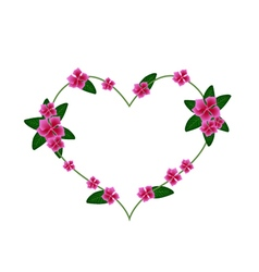 Pink cape periwinkle flowers in a heart shape vector
