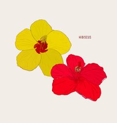 hawaiian hibiscus flowers sketch vector image vector image