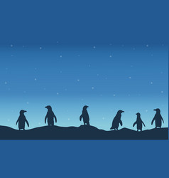 Penguin silhouette at night scenery vector