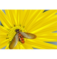 yellow flower and colored fly vector image vector image