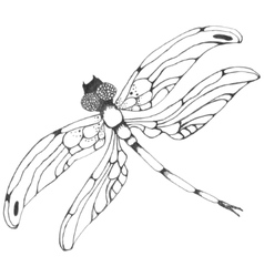 Dragonflie Hand drawn graphic in vector image