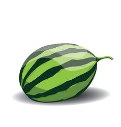 Whole watermelon vector