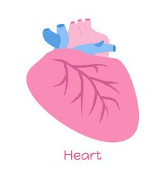 Heart in flat style viscera icon internal organs vector