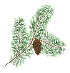 Pine cone with pine needles vector